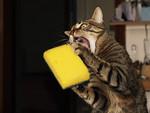Våldsam katt.