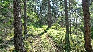 Gammal_orörd_skog_på_öns_norra_sida