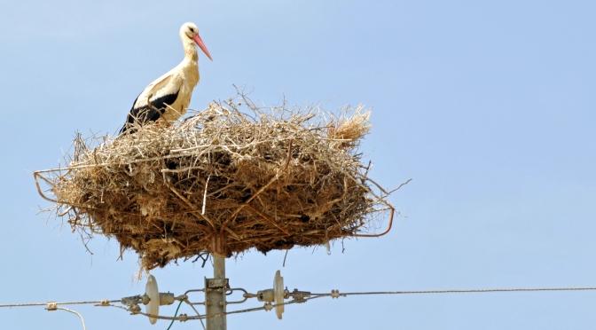 Fridolin och Storkens nyheter