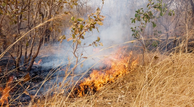 Barn och gräsbränder