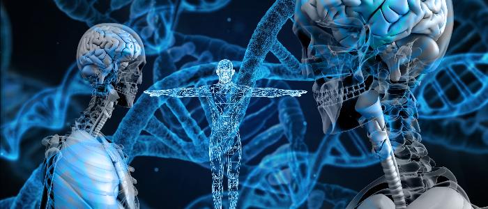 Nedärvd essens eller biologiskt arv - vad är egentligen skillnaden?